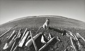 Vilemo Barenco karavelės liekanos. Naujoji Žemė