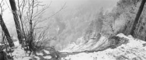 Baltoji žiema II. Pūčkoriai