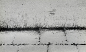 Grass of pavement III