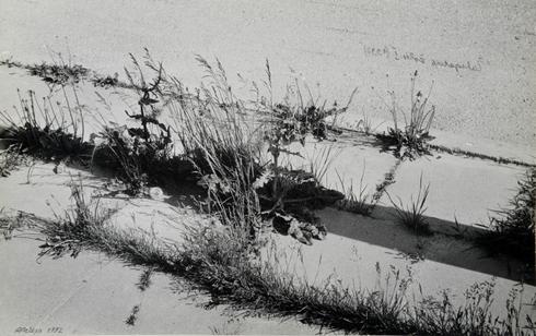 Grass of pavement I