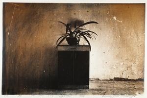 Things 208 (Plant)