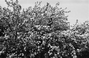 """R. Rakauskas medyje. Iš serijos """"Fotografai"""""""