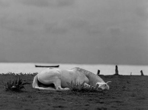 """xxx"" (Sleeping by the Sea)"