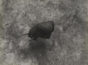 Bounjeur la France (Snails)
